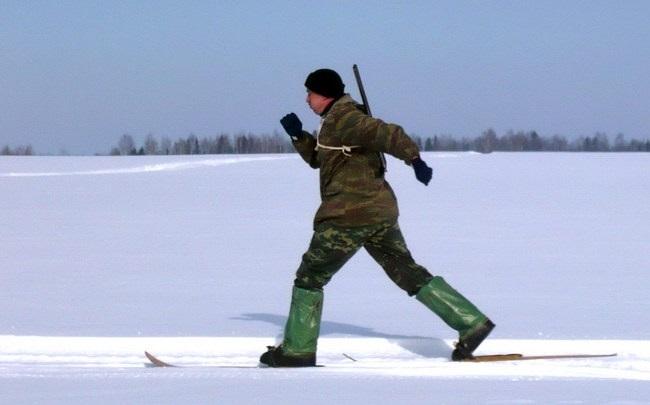 Лыжи для зимней охоты на тетерева