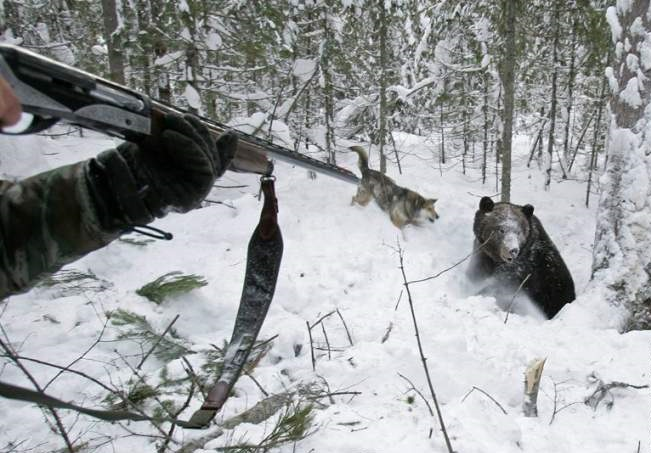 Выстрел в медведя