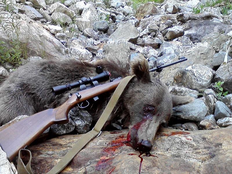 Охота на крупного зверя с мелкашкой не рекомендуется