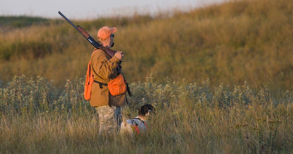 Использование собаки для охоты на перепелку