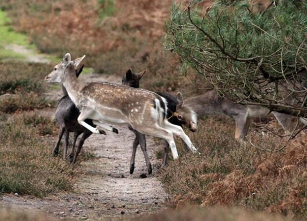 Охота на косулю осенью: с подхода, загоном, на манок