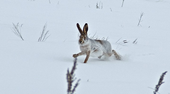 Закладка широкого круга зайцем