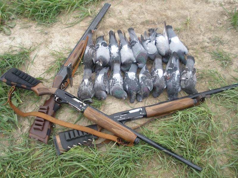 Добытые дикие голуби