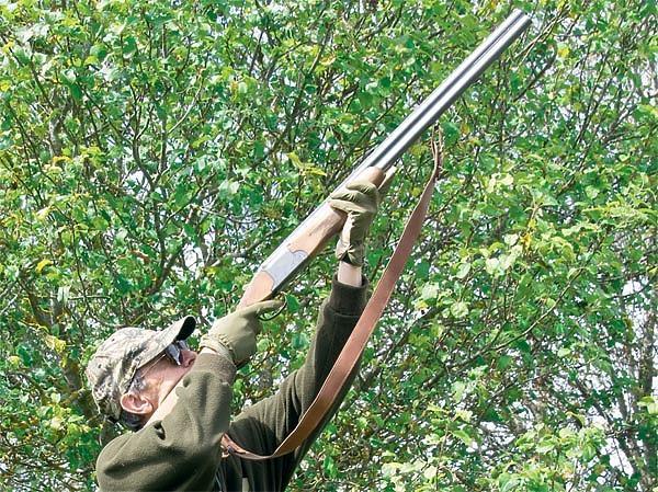 Стрельба по птицам на деревьях