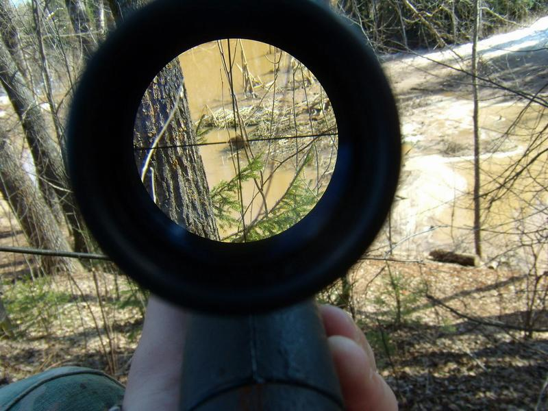 Ондатра в снайперском прицеле