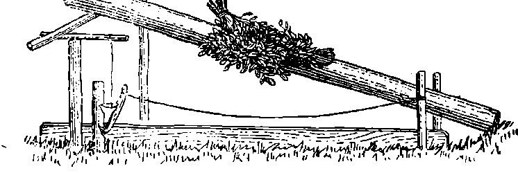 Ловушка на кабаргу