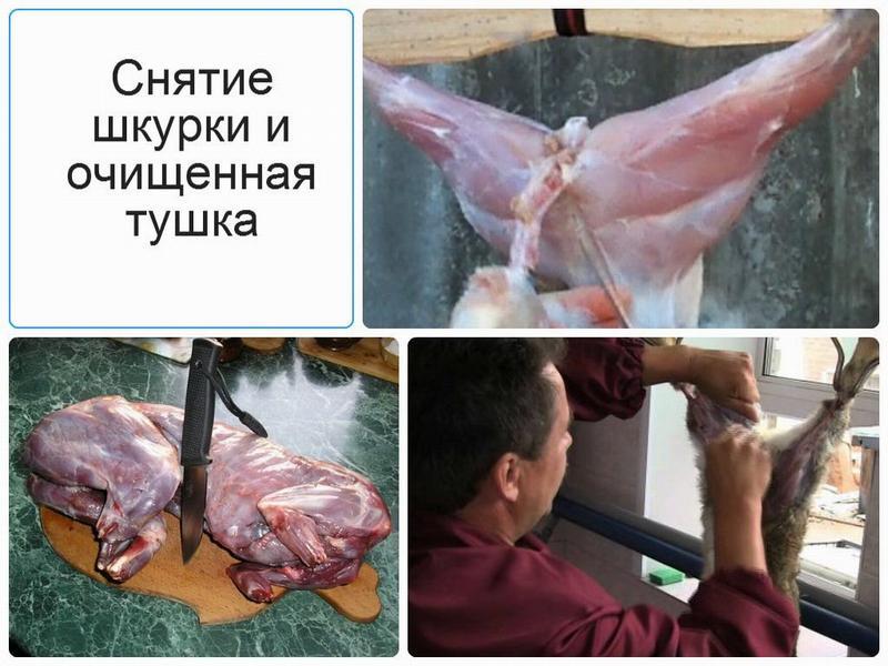 Снятие шкуры с зайца