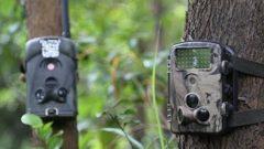 Фотоловушки для охоты