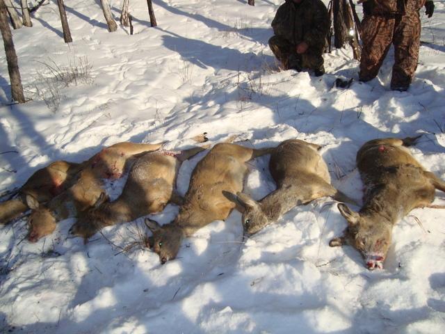 Охота на косуль зимой