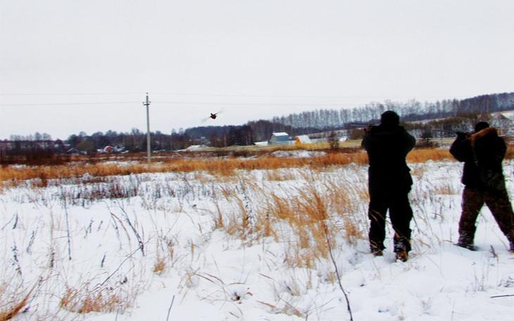 Часы охоты на фазана