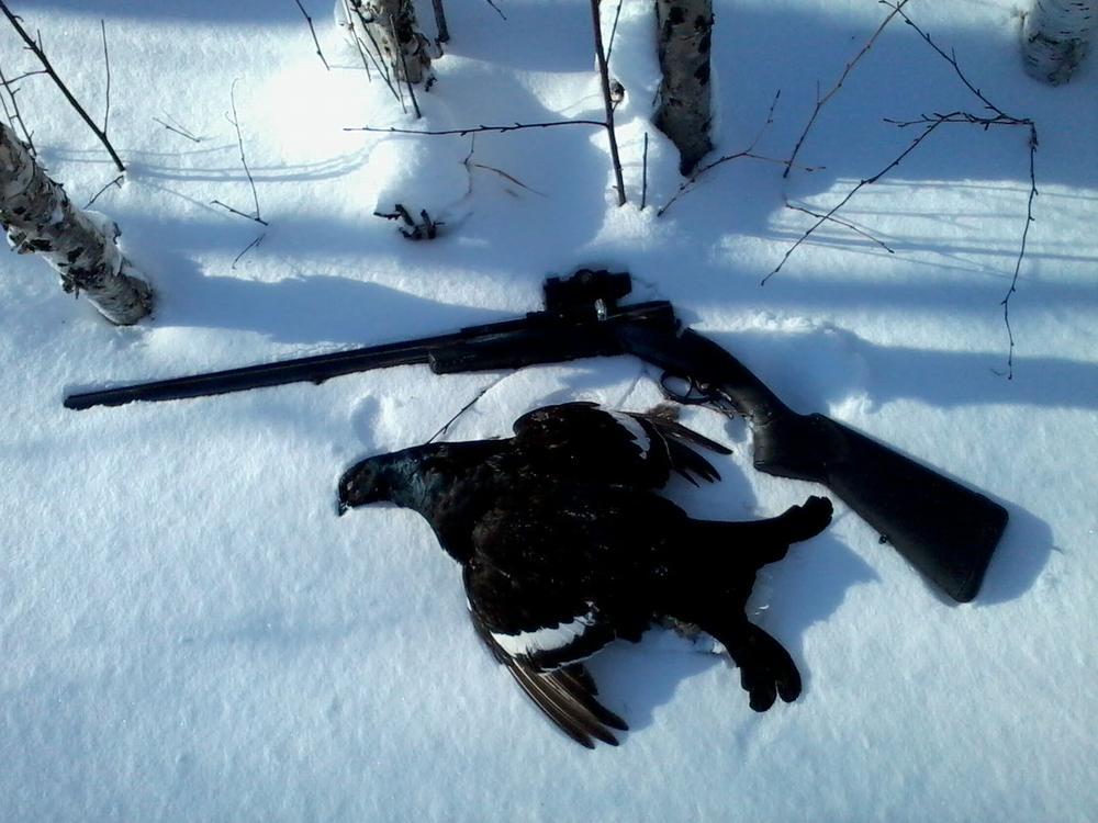 Выбор дроби для охоты на тетерева