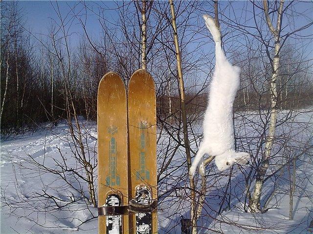 Охота на зайца зимой петлями