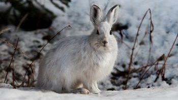 На зайца зимой с подхода