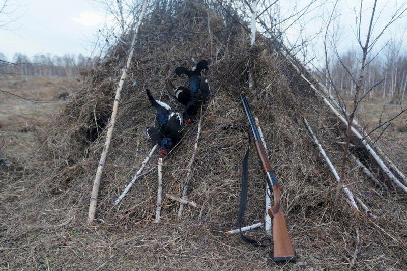 Шалаш для охоты на тетерева