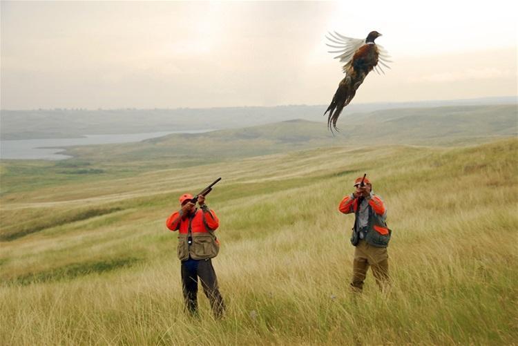 Дратхаар поднял фазана