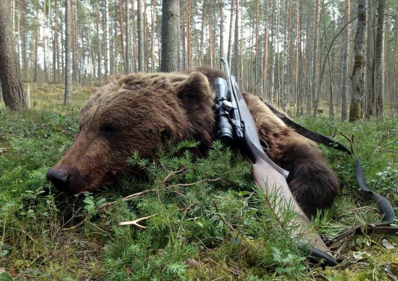 Правильное оружие - залог успешной охоты на медведя