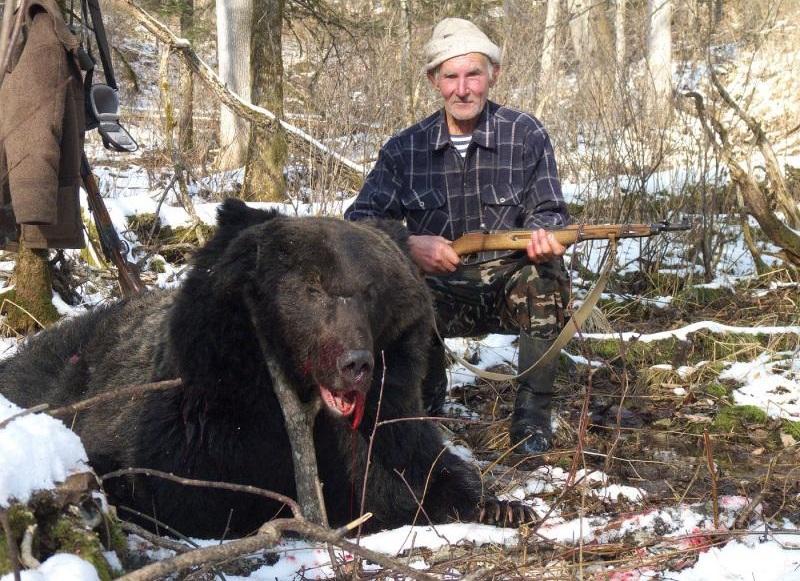 Подстреленный с карабина Симонова медведь