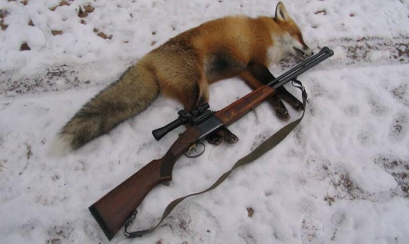 Добытая лиса