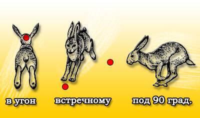 Схема стрельбы по зайцу