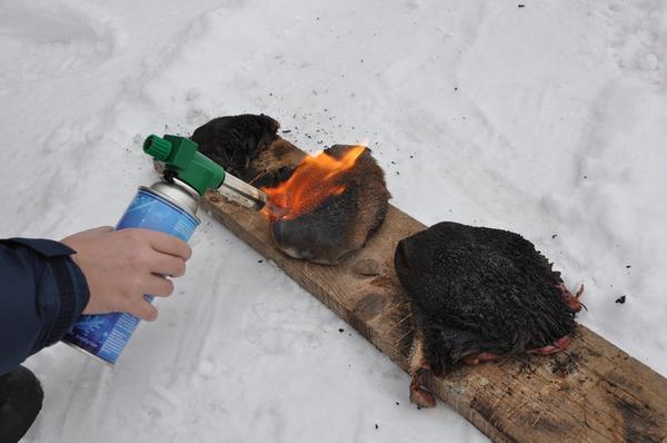 Удаление волосков газовой горелкой