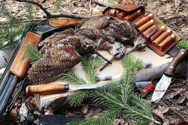 Результат охоты на куликов
