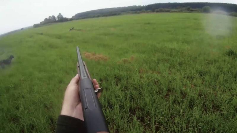 Стрельба по бекасу