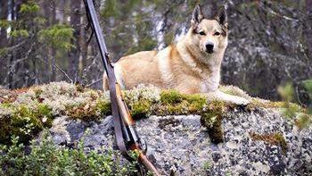 Как приучить собаку к выстрелам