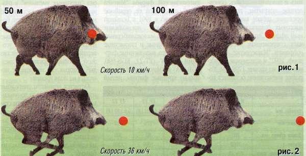 Схема стрельбы по бегущему кабану