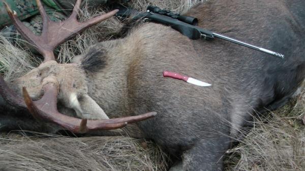 Подстреленный лось