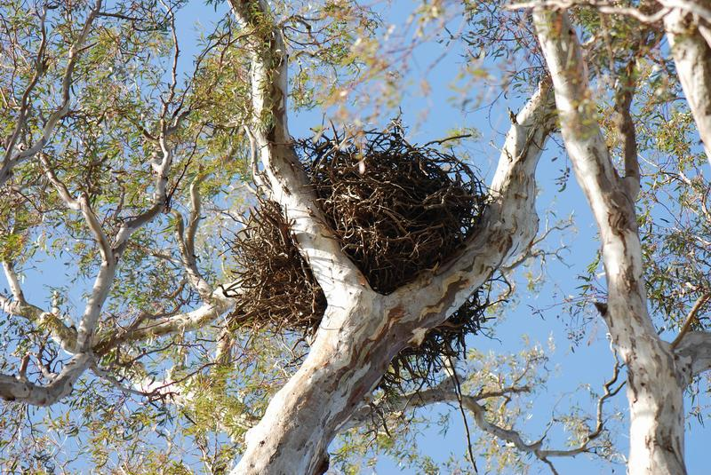Гнездо белки