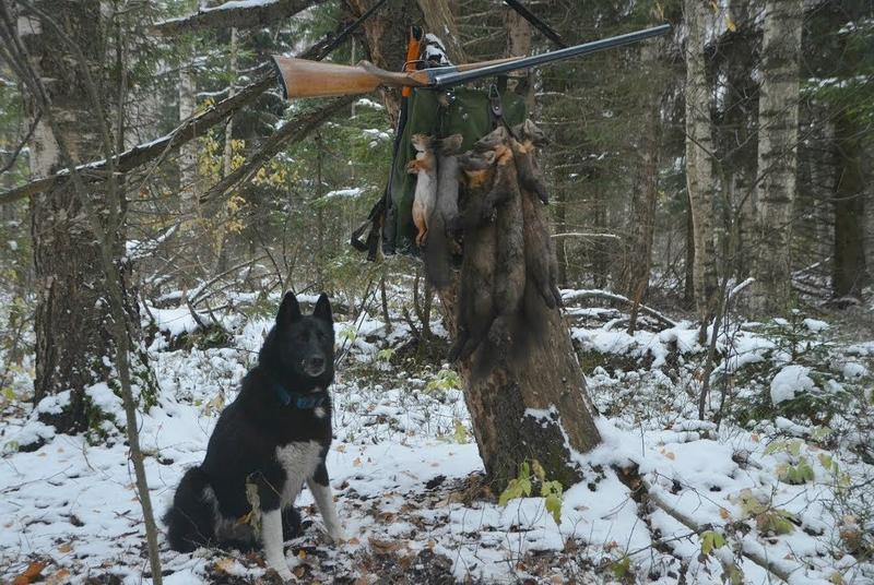 Успешная охота с лайкой
