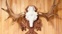 Как сделать медальон для рогов своими руками