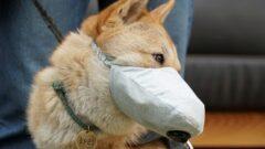 Болеют ли собаки коронавирусом