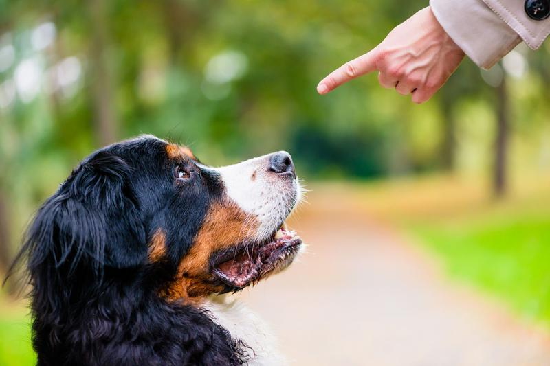 Ограничение активности пса